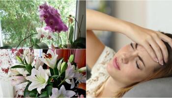 Якщо часто турбують головні болі, тоді приберіть ці рослини зі свого дому
