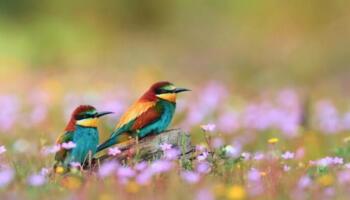 10 найкрасивіших пташок в Україні. Деякі екзотичні на вигляд птахи прилітають до нас на нетривалий період і їх можна побачити