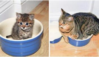 10 доказів того, що котики ростуть дуже швидко! Спостерігати за тим як вони ростуть дуже цікаво!