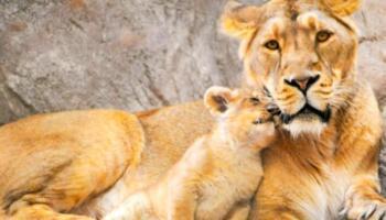 Мамі — такі мами… Милі фотографії мам з маленькими тваринками