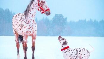 10 пар тварин, які випадково є схожими один на одного