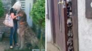 Собаки, які вражають або кілька фото милих вовкодавів.