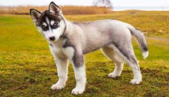 Вчені довели, що собаки розпізнають людей, які не варті довіри