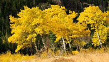 Осінь золота! Чудові фото пейзажів неймовірної пори року. Поки «бабиного літа» ще не було, пропонуємо Вам подивитись на неймовірні пейзажі золотої осені.