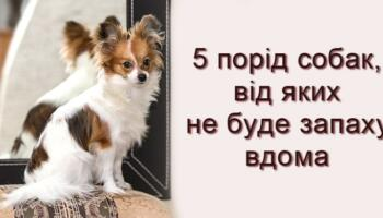 Підбірка охайних порід собак для будинку