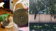 Ці фото доказ того, що при потребі людина у побуті може просто «блискотіти» розумом!