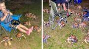 Десятки величезних голодних крабів порушили сімейний пікнік в Австралії