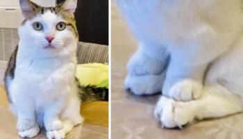 20 фотографій котів, у яких відбувся збій