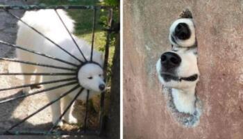 15+ прикладів, коли собаки поводилися як справжні дурники. Але від цього хочеться любити їх ще сильніше