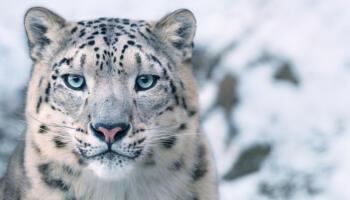 21 неймовірна світлина тварин, що вимирають. Фотограф знімав їх по світу 2 роки