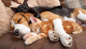 12 фотографій, які доводять існування дружби між тваринами