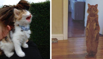 20 котиків, які настільки досягли успіху в мистецтві лицедійства, що пора вручати їм особливий котячий Оскар