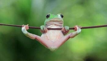 Індонезієць робить дивовижні портрети звичайних жаб