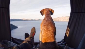 Фотограф подорожує зі своєю собакою по всій Америці