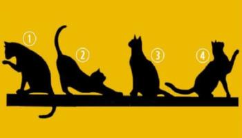 Цікавий тест: Оберіть кішку й дізнайтеся вашу мету в житті