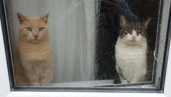 10 зустрічей, які ви не очікували побачити, якщо у вас вдома живе кіт