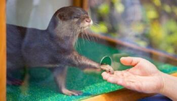15 фотографій з життя тварин, які зарядять позитивом