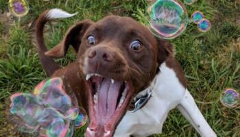 25 прикладів фото, на яких дійсно «зловили момент»