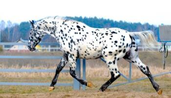 10 зображень дуже гарних коней