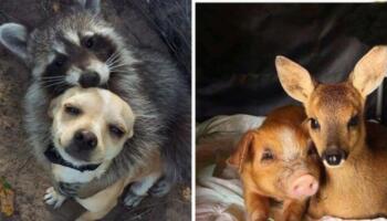 15 душевних знімків про те, як виглядає справжня дружба між тваринами