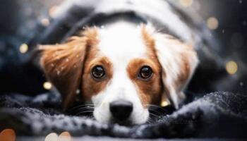 Дівчина з Австрії фотографує собак, чим показує їх унікальний характер та красу