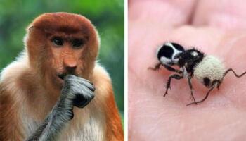17 тварин, якими природа нас не тільки здивувала, а й перевершила саму себе