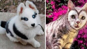18 фото тварин, над забарвленням яких природа вдало пожартувала