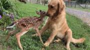 10 маленьких звірів, які хотіли подружитися