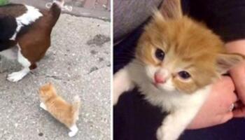 Бездомне кошеня наздогнало людину з собакою і пішов з ними додому
