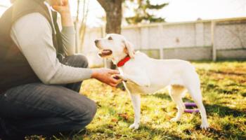 19 рухів, які допоможуть вам зрозуміти вашого собаку