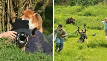 19 фото про те, як фотографам дикої природи іноді заважають тварини