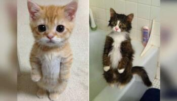 19 смішних котиків, які вміють стояти на задніх лапках