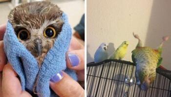 20 випадків, коли птахи були смішнішими та харизматичнішими за інших істот