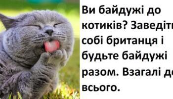 12 фактів про котів та їх характери