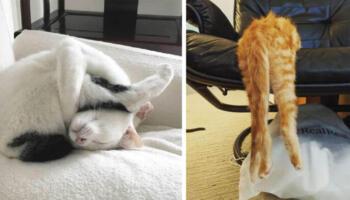 18 волохатих лінивчиків, які обожнюють заснути там, де людина нізащо не здогадається