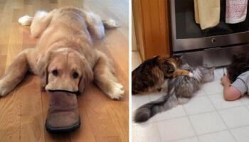 19 доказів, що найкращі ліки від нудьги — завести собі домашню тваринку