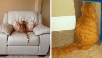12 прикладів того, як виглядає справжня котяча образа