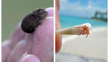 Найменші тварини світу — менші за ваш палець!