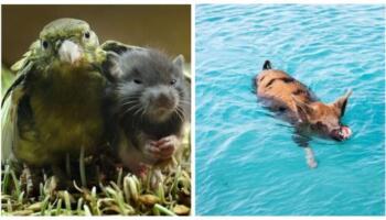 Приклади незвичайних властивостей тварин — ви й не знали, що вони так вміють!