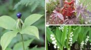 10 рослин, яких слід побоюватись