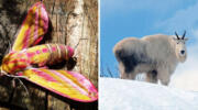 12 тварин, яких природа зробила унікальними