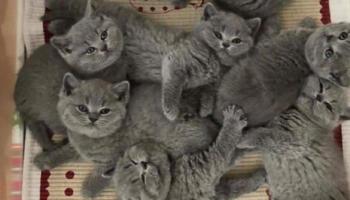 10 науково обґрунтованих причин завести кота