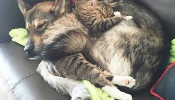 Обрати кошеня у притулку господарям допоміг пес