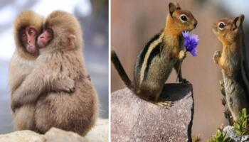 23 фото закоханих тварин, які розтоплять будь-які серця