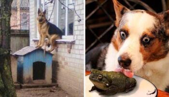 23 найсмішніші світлини з тваринами