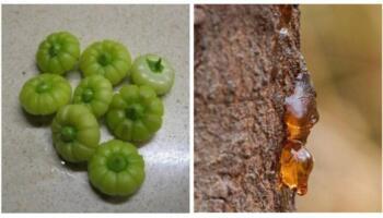 І не кажіть, що не їли: 12 фото вуличної їжі нашого дитинства