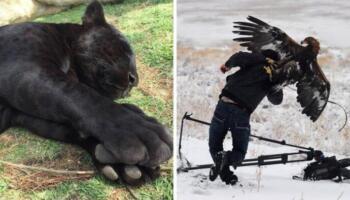 12 фото, які передають всю силу природи і тваринного світу
