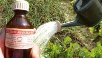 Перевірений засіб, який допоможе захистити рослини від шкідників та хвороб
