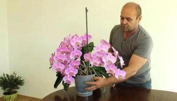 Як доглядати за орхідеями в горщику
