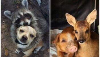 14 душевних знімків про те, як виглядає справжня дружба між тваринами